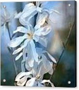 Pale Blue Acrylic Print