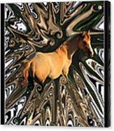 Pale Horse Acrylic Print by Aidan Moran