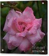 Pale Pink Beauty Acrylic Print