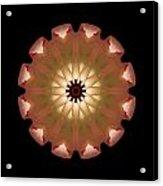 Pale Pink Tulip Flower Mandala Acrylic Print