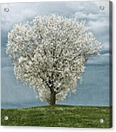 Pale White Tree On Cloudy Spring Day E83 Acrylic Print