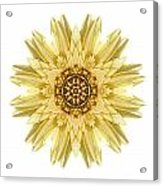 Pale Yellow Gerbera Daisy I Flower Mandala White Acrylic Print