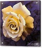 Pale Yellow Rose Acrylic Print