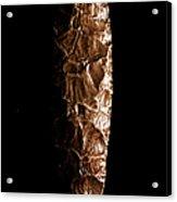 Paleolithic Tool 3 No Text Acrylic Print