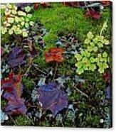 Palette Of Colour Acrylic Print