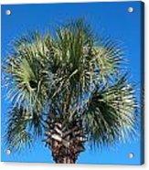 Palm Against Blue Sky Acrylic Print