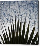 Palm And Clouds Acrylic Print