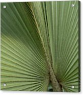 Palm, Belize Botanic Garden Acrylic Print