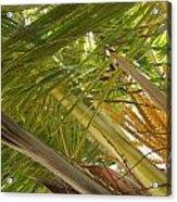 Palm Blossoms Acrylic Print