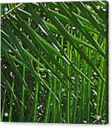 Palm Crosshatch Acrylic Print