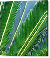 Palm Cycas Fronds Acrylic Print