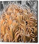 Palm Flower Acrylic Print