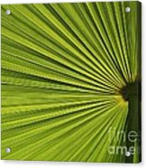 Palm Fron Abstract Acrylic Print