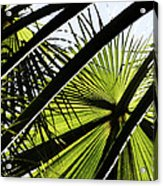 La Palm 3  Acrylic Print