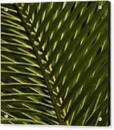Palm Frond Patterns Acrylic Print