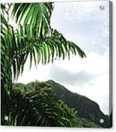 Palm Fronds El Yunque Acrylic Print