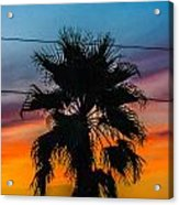 Palm In The Sunset Acrylic Print