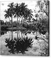 Palm Island  Acrylic Print