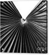 Palm Leaf 6684bw Acrylic Print