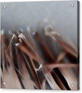 Palm Leaf Acrylic Print by Eileen Shahbazian
