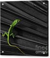 Palm Leaf Lizard Acrylic Print