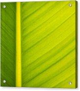 Palm Leaf Macro Abstract Acrylic Print