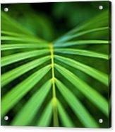 Palm Leaf Pattern Acrylic Print
