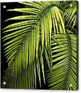 Palm Leaves Acrylic Print