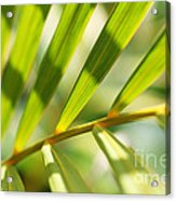 Palm Leaves Pattern Acrylic Print