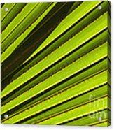 Palm Lines Acrylic Print