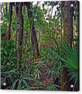 Palm Menagerie. Highlands Hammock. Acrylic Print