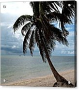 Palm On The Beach Acrylic Print