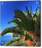Palm Over The Sea Acrylic Print