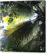 Palm Pattern 1 Acrylic Print