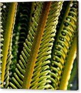 Palm Reading Acrylic Print