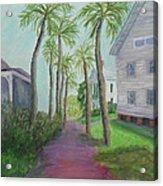 Palm Row In St. Augustine Florida Acrylic Print