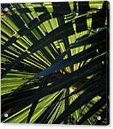 Palm Shadows Acrylic Print