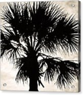 Palm Sihlouette Acrylic Print