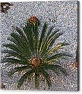 Palm Spray Acrylic Print