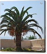 Palm Tree 3 Acrylic Print
