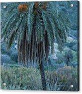 Palm Tree  Almanzora Mountain Spain  Acrylic Print