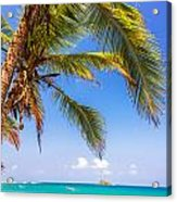 Palm Tree And Caribbean Acrylic Print