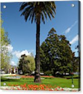Palm Tree And Flower Gardens, Seymour Acrylic Print