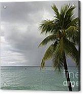 Palm Tree And Ocean Acrylic Print