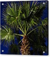 Palm Tree At Night Acrylic Print