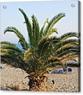 Palm Tree By The Beach Acrylic Print