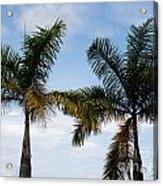 Palm Tree In Costa Rica Acrylic Print