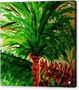 Palm Tree In The Garden Acrylic Print by Marie Bulger