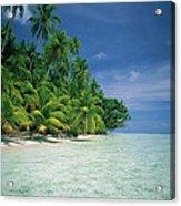 Palm Tree Lined Beach Papua New Guinea Acrylic Print