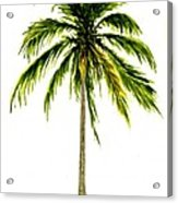Palm Tree Number 2 Acrylic Print